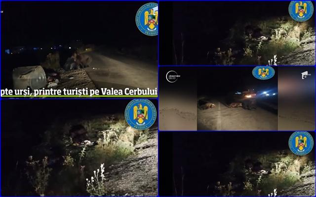 """7 ursi au luat masa """"in tabara"""", pe Valea Cerbului, reusind sa bage groaza in turisti!"""