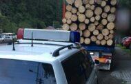 Ilegalitati in domeniul silvic! Politistii prahoveni au confiscat  126 metri cubi de material lemnos!